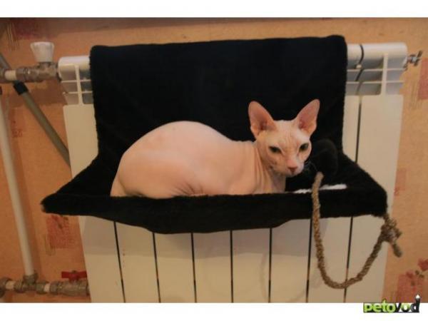 Гамак для кошки на батарею как сделать своими руками